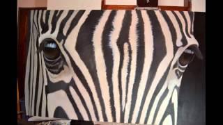 Zebra Eyes Time-lapse