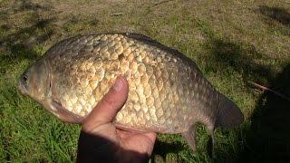 Клюет ли рыба на сало