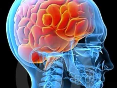 Brain Parts: brain, brain stem, cerebellum, cerebrum ...