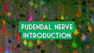 Pudendal nerve introduction