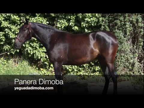 Panera Dimoba (Publicado 11-7-2018)