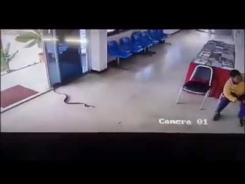 Змея напала на мужчину