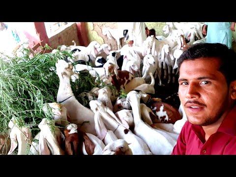 سیالکوٹ میانہ پورہ شعبہ پھاٹک   03410341995