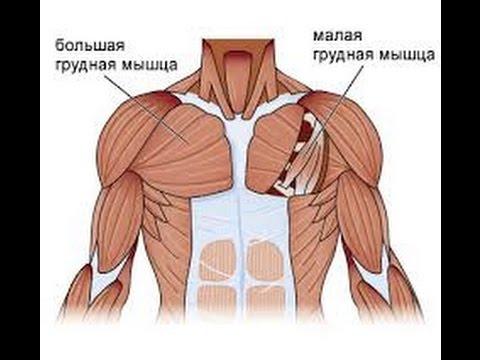 Туннельный синдром и малая грудная мышца