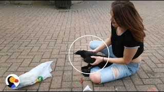 Crow Stuck in Garbage Rescued by AWESOME Woman | The Dodo