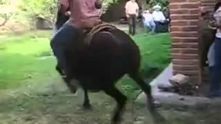 Vai no cavalinho cavalo dançando