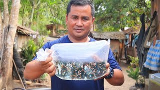 BUYING the world's CHEAPEST GUPPY **This FISH FARM is insane**