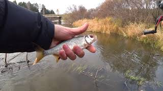 Рыбалка в красноярском крае река рыбная
