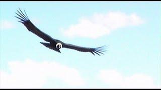 El Condor Pasa, original footage