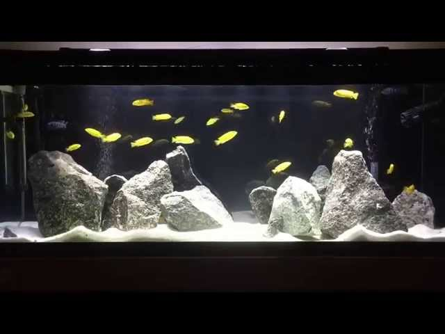 New Lake Malawi Mbuna Fish Tank | How to aquascape Mbuna tank | Tips on Rockscape | African Cichlids