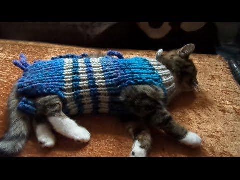 DIY: STRICKEN für den Liebling,Katzen & Hunde, schnell & leicht gemacht :)) toller OP Schutz,...