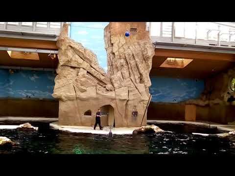 Dulfin show, عرض الدلافين في ألمانيا