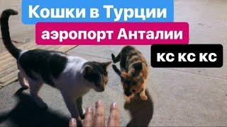 Кошки в аэропорту Анталии, Турция. Летим в Москву. Cats at the airport Antalya. We fly to Moscow