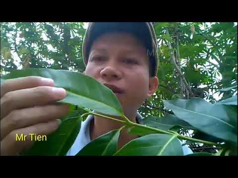 Papilloma krém és patikus