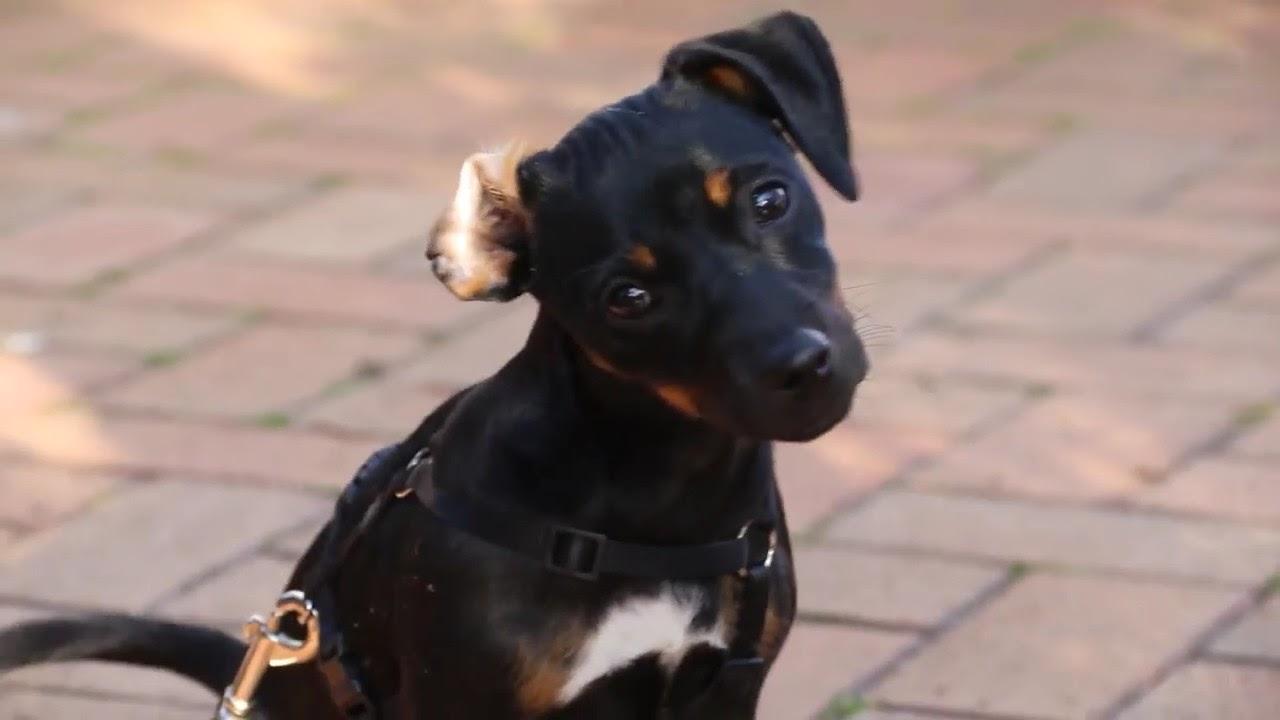 giardia hondenforum furdoszobai fergek