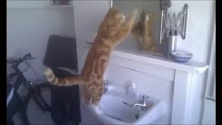 коты в зеркалах