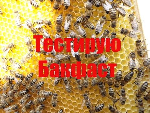 Тестирую Бакфаст А 32 из Беларусии, зимующей в терморегулируемом надземном зимовнике.