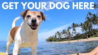 How to Avoid Pet Quarantine in Hawaii | Cost for Airport Release, How Long it Takes & Our Experience
