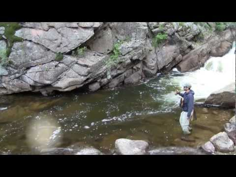 Nice fly fishing in small stream