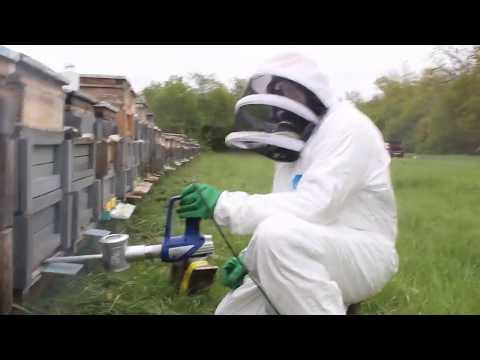 A paraziták könnyű megsemmisítése