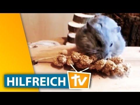 Hamster Spielzeug basteln - Beschäftigung für Nagetiere - Mein Freund der Hamster
