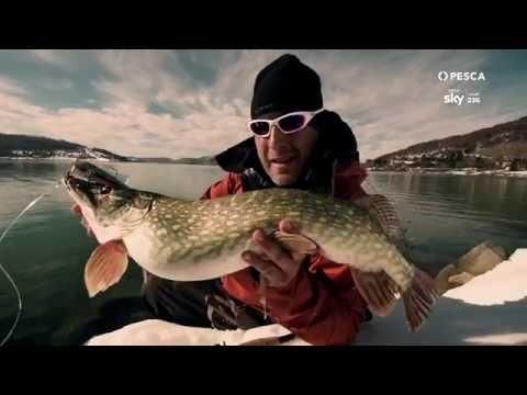 La pesca in agosto in Vladimir
