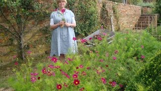 How To Sow, Grow And Stake Cosmos