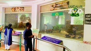 vandalur zoo snakes|tamil nadu snake park|arignar anna zoological park|snake park