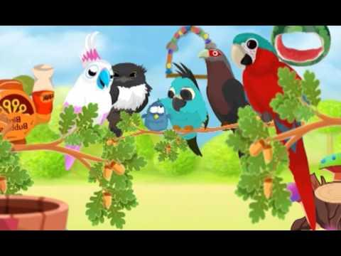 Video of Bird Land