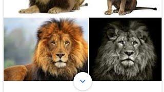 Лев против всех животных