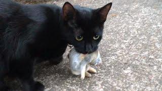 Tiny kitten eating a baby rabbit или маленький котёнок кушает малышку-зайку!