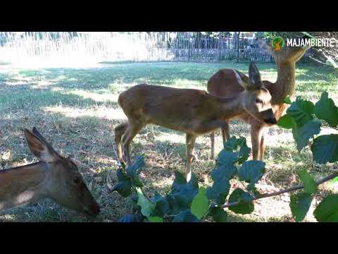 Preview video Majambiente Estate 2017
