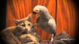 попугай и кот и озвучка)