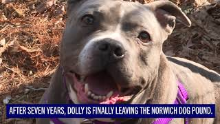After years on death row, pit bull gets sanctuary