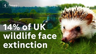 Extinction Britain: Wildlife survey exposes shocking decline in animals