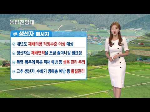 YTN 농업전망대(엽근채소·양념채소 관측 8월) (2019.08.15) 이미지