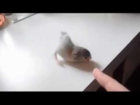 За попугаем повторяй