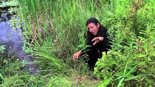 7Song talks about Blue Vervain (Verbena hastata)