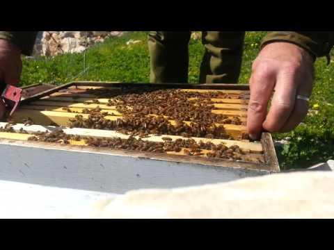 пчеловодство . часть 2 осмотр и работа с пчелой 14/2/2016