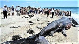 LARGEST Ocean Creatures
