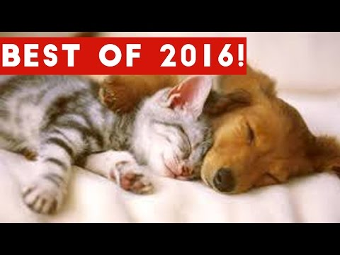 The Best Funny Pet & Animal Videos of 2016 Weekly Compilation   Funny Pet Videos
