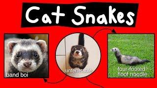 Cat Snakes
