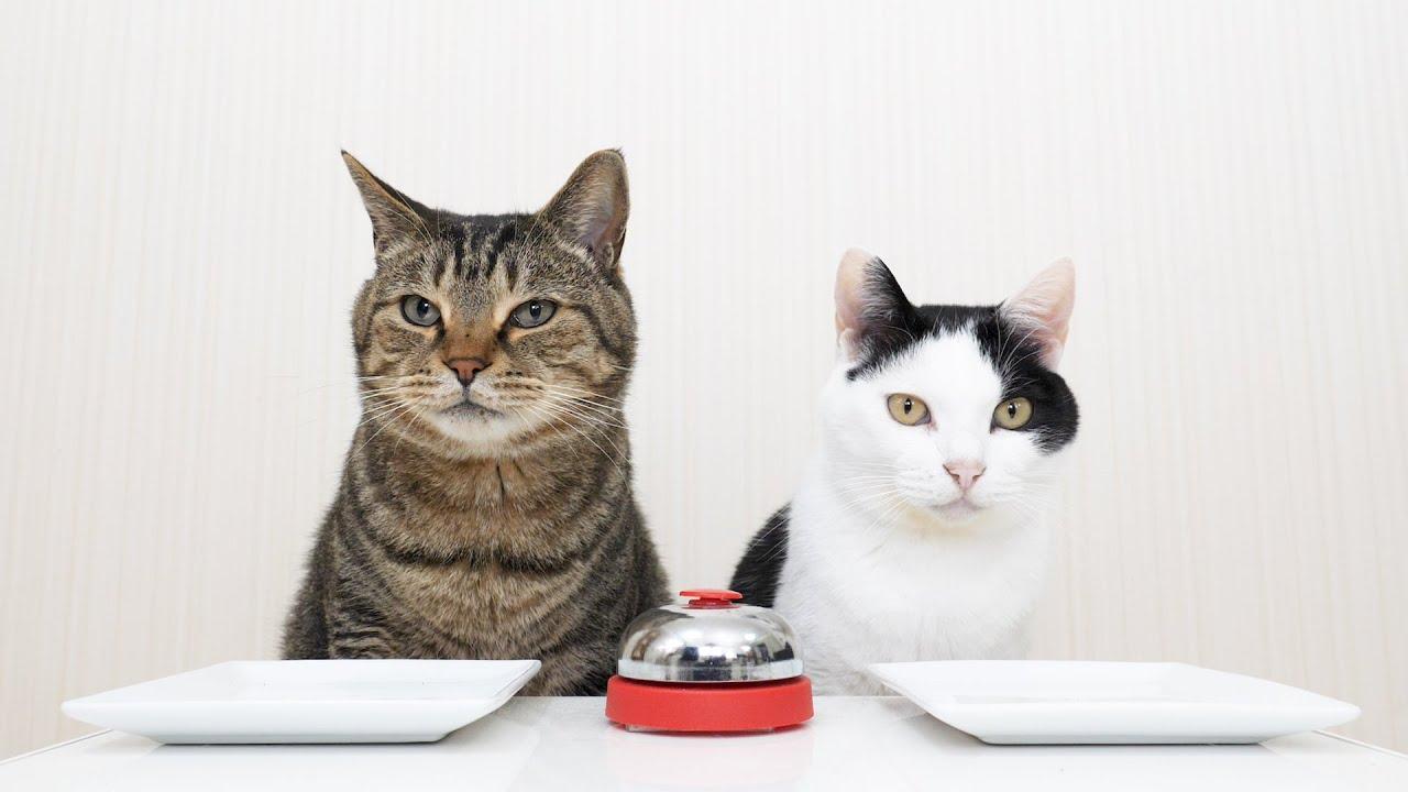 Кошки и колокольчик фото