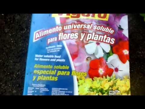 Alimento para plantas de flores abono soluble