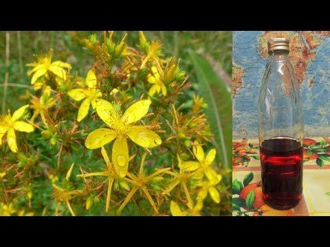 Спиртовая форма ферментированной травы 🌾 зверобоя.