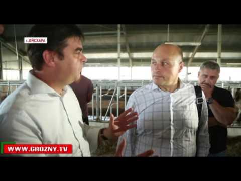 Рамзан Кадыров посетил животноводческий комплекс  в Ойсхара