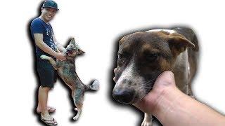 NTN - Thăm Lại Những Chú Chó Được Cứu Từ Lò Mổ (Visiting all the dogs saved from dieing )