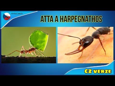 Le virus papillomavirus chez l homme