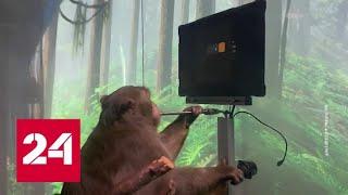 Firma Ilona Muska opublikowała filmik przedstawiający małpę cyborga. Vesti.net – Rosja 24