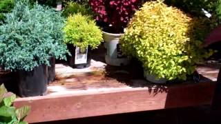 Shrubs for Small Spaces